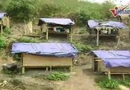 Học sinh dựng lều bên sườn núi trọ học
